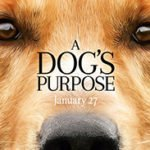 Holly On Hollywood – A Dog's Purpose