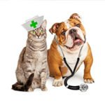 How's Your Pet's Health?